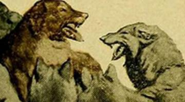 """Call of the Wild"" by London: BerkeleyX Book Club"