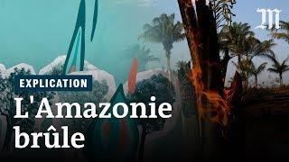 Pourquoi l'Amazonie brûle et pourquoi c'est grave