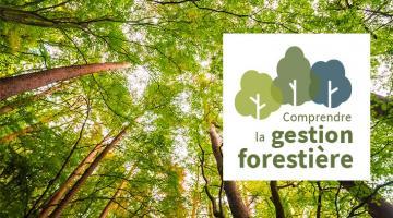 Comprendre la gestion forestière