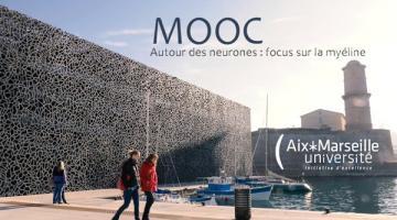 Autour des neurones : focus sur la myéline