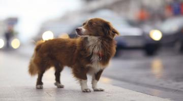 Dog Behavior: Problems and Solutions