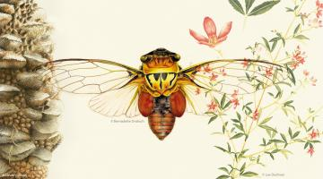Drawing Nature, Science and Culture: Natural History Illustration 101