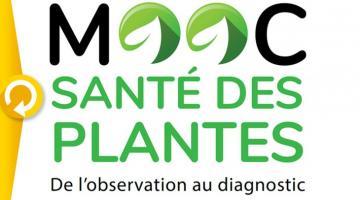 Santé des plantes : de l'observation au diagnostic
