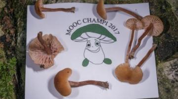 MOOC Champignons