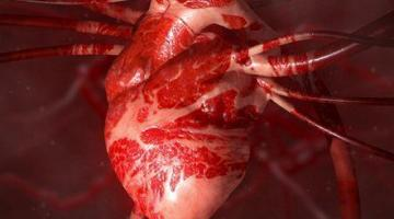 Heart Health: a Beginner's Guide to Cardiovascular Disease