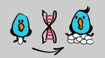 Genetic Models for Animal Breeding