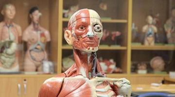 Human Anatomy for Stroke