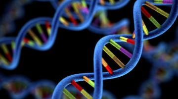 The Genomics Era: the Future of Genetics in Medicine