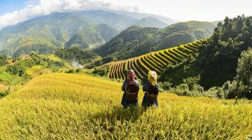 Landscape Governance: Collaborating Across Sectors and Scales