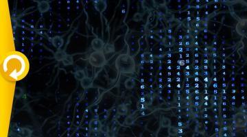 Des neurones à la psyché, introduction aux réseaux de neurones biologiques et artificiels