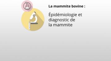 Épidémiologie et diagnostic de la mammite