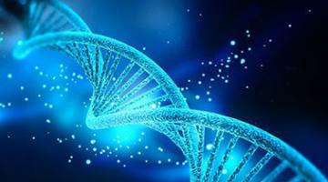 AP® Biology - Part 2: Genetics