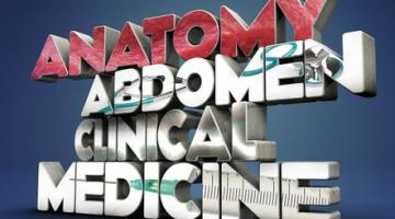 Exploring Anatomy: the Human Abdomen