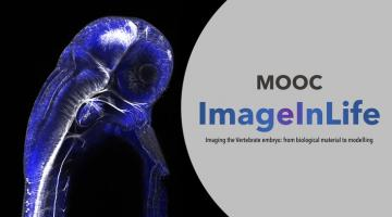 ImageInLife - Imaging the Vertebrate embryo: from biological material to modelling