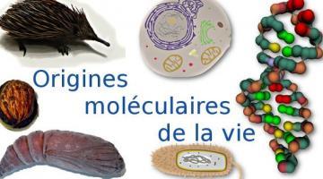 Les origines moléculaires de la vie