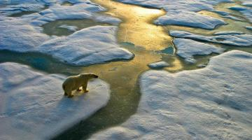 Tipping Points: Climate Change and Society