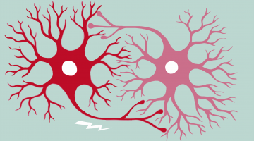 Fundamentals of Neuroscience, Part 1: The Electrical Properties of the Neuron
