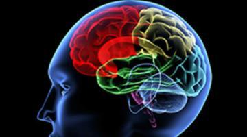 系统神经科学