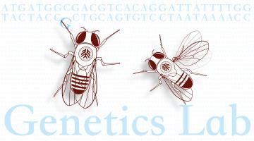 遗传学实验