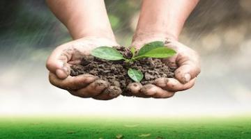 Sustainable Soil Management: Soil for life