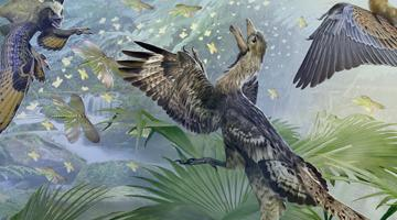 Paleontology: Theropod Dinosaurs and the Origin of Birds