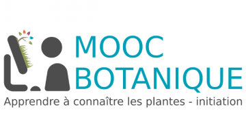 Botanique : Apprendre à connaître les plantes - initiation