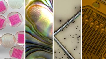 科学和工程照片拍摄:实用指南