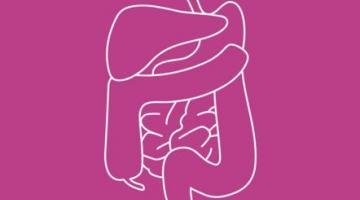 Anatomy: Know Your Abdomen
