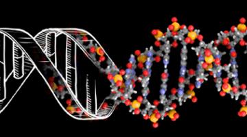 DNA:生物的遗传密码