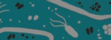 Введение в Биоинформатику: Метагеномика (Introduction to Bioinformatics: Metagenomics)
