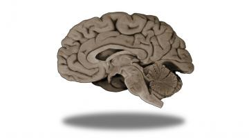 Foundational Neuroscience for Perception and Action