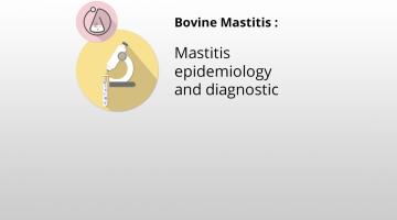 Mastitis epidemiology and diagnostic