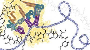Molecular Biology – Part 3: RNA Processing and Translation