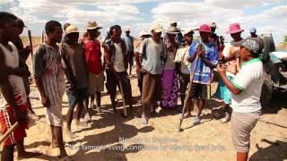 SUNREF : le jatropha comme biocarburant à Madagascar