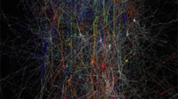 Synapses, Neurons and Brains