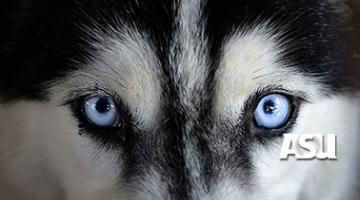 Dog Origins