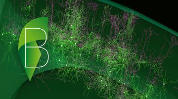The Multi-scale brain