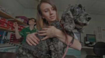 EDIVET: Do you have what it takes to be a veterinarian?