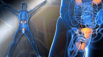泌尿科学导论