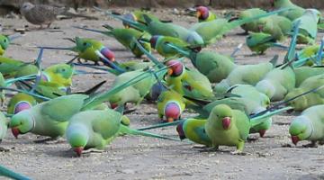 鸟类101 :宠物鸟简介