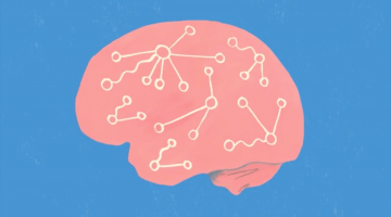 Fundamentals of Neuroscience, Part 3: The Brain