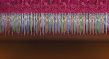 光、神经元放电与图像:视觉背后的神经科学